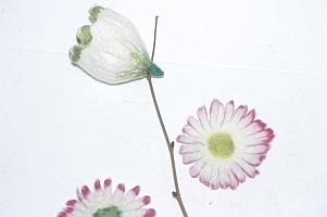 Filzblüten